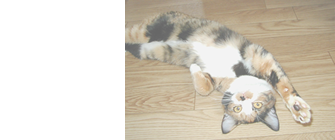 猫の習性・猫の体