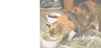 猫の栄養学