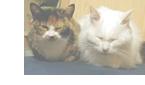 品種による猫の特徴