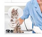 動物看護士 獣医師の助手など