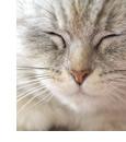 一般的な猫 オーバーショット