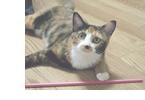 猫のしつけのポイント