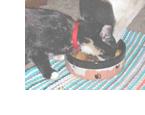 猫の食事のしつけ